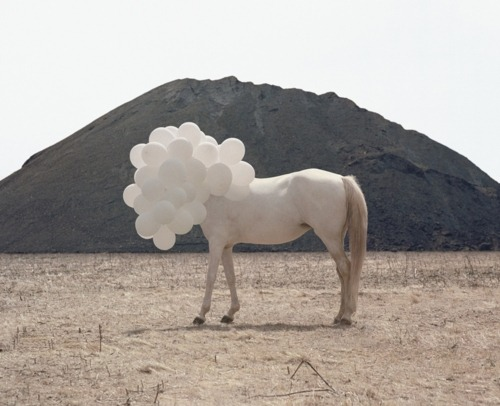 Andrea Galvani, Death of an image.  Inspiration Beloved Media