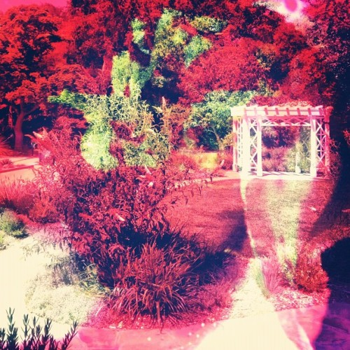 Garden trip #glassdoordecal (Taken with instagram)