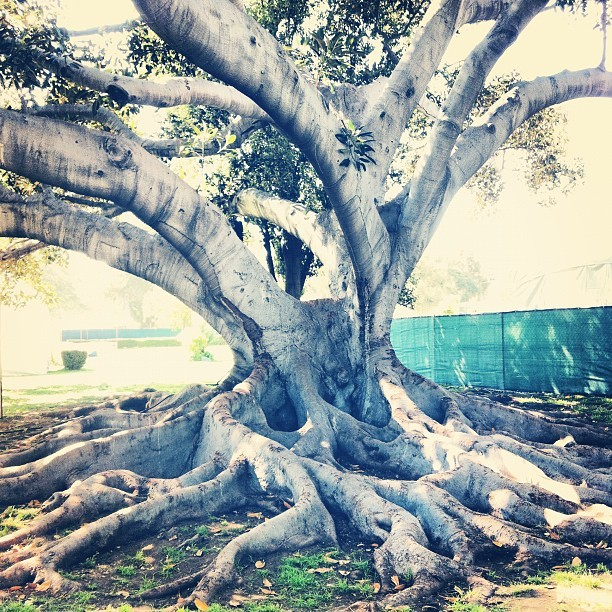 Look at this tree.  (Taken with instagram)