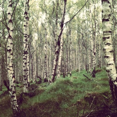 Sooo many trees #grass #tree #trees #birch #bark #leaves #grass #forest #woods #sky #nature #landscape #scenic #wildlife #bark #wood #lovely #beautiful #instagram (Taken with instagram)