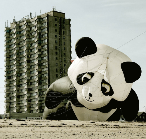doggylife:  Large Panda on the prowl  (Explore 20/09/2008) (via only lines)