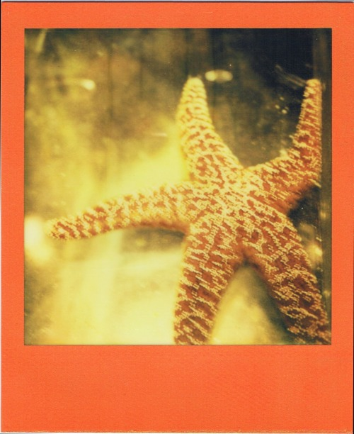 polaroidgang:  Starfish stay still. Photographer doesn't.
