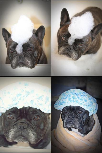 frenchiesrule:  mumoffour:  BATH TIME  we all need a smile today.