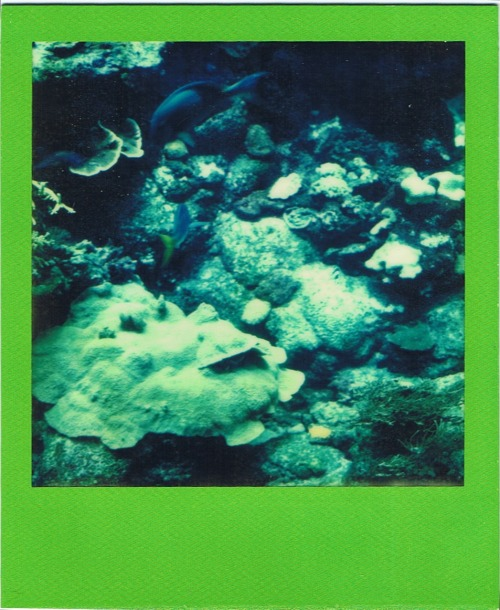 polaroidgang:  Under the sea.