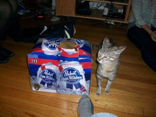 cat you are drunk