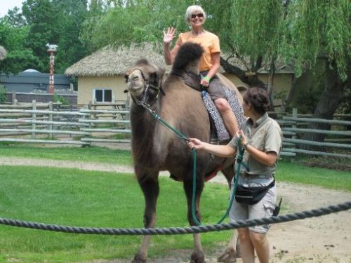 my mother riding a camel. why? i'm not sure.