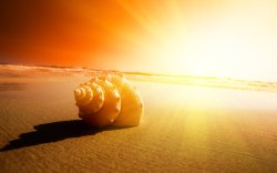 Seashell and sun. Photo blog, I follow back :)