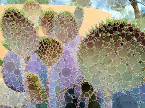 Playing with the Percolator app (Santa Rita prickly pear)