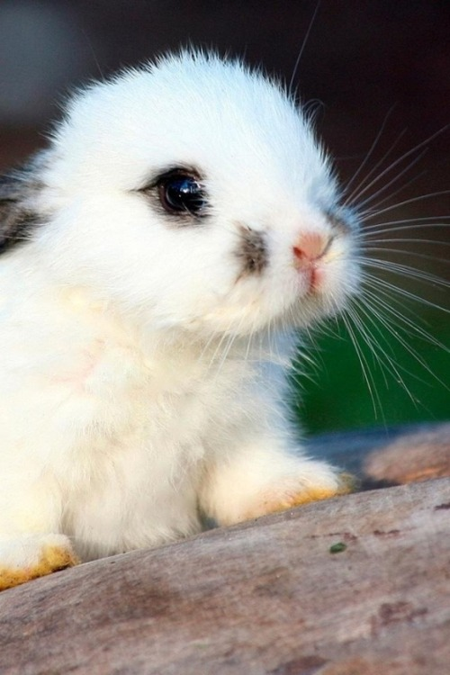 Patches via:cutestpaw. For the Bunny Lovers :)