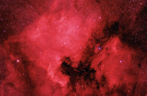 n-a-s-a:  The North America and Pelican Nebulae  Credit & Copyright: Danny Lee Russell