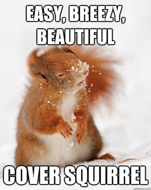 peecharrific:  kidkoni:  etherealsylph:  pleatedjeans:  cover squirrel via  Haha Cover Squirrel   Werk!  Loooooooool