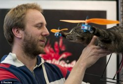kiskex:  Cats away! Artist turns his dead pet into flying helicopter after it is killed by a car | Mail Online