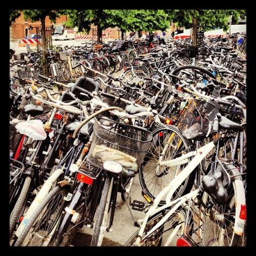 They also reeeaaalllyyy like bikes… (Taken with instagram)