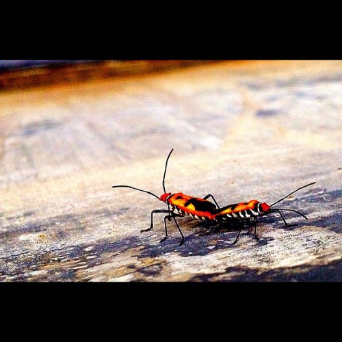 Taken with my iPhone #insects #animal #iphoneography #iphonesia #iphone4s #instagram #instagood #popular #photooftheday #ig #igers (Taken with instagram)