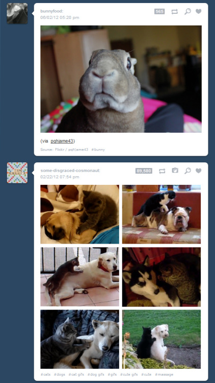 omnomnominator:  A screenshot from the #Animals tag, right?  Oh…  Srsly