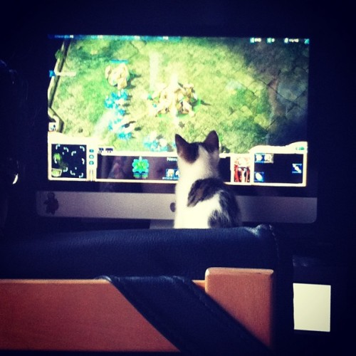 James has a logistical assistant #kitten #pet #cat #starcraft (Taken with instagram)