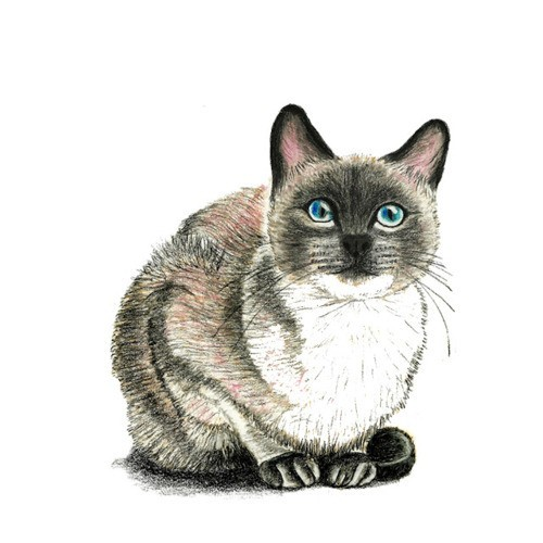 1000drawings:  Cat & Kitten Illustrations