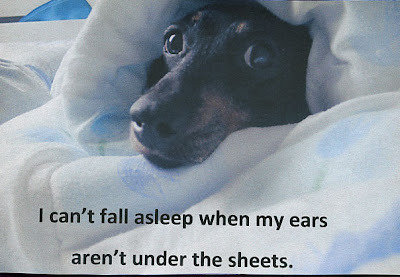 "posttsecretss:  ""I can't fall asleep when my ears aren't under the sheets.""  So cute"