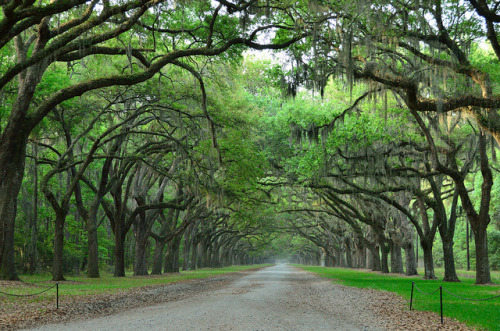intracoastal-wanderings:  Wormsloe Plantation in Savannah, GA