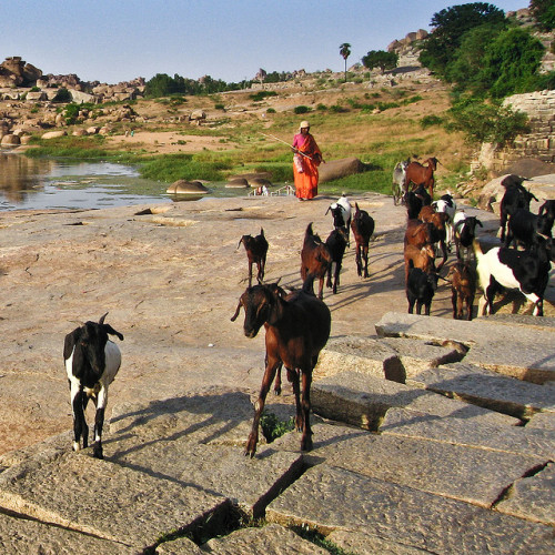 The shepherd, Hampi ಹಂಪೆ by Marji Lang on Flickr.Hampi, India