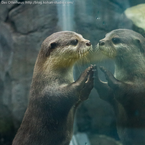 dailyotter:  Who Is That Handsome Fellow? Via Das Otterhaus   Cukker. :)
