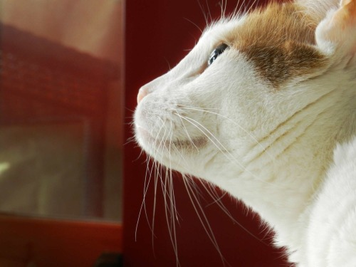 MY KITTY. Rule of thirds. Reflected light. Reflection of light off his eyeball.