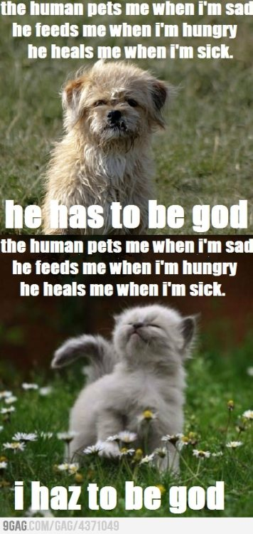 9gag:  I'm actually starting to like cats.  LOLOLOLOLLLLL