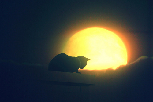 The Cat&the Moon by VegaStar2012 on Flickr.