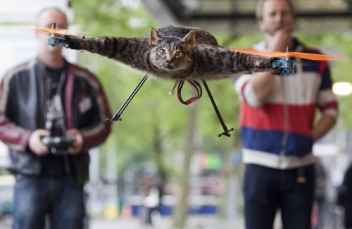 Dutch artist turns dead cat into remote-controlled helicopter. Watch the final test flight here.
