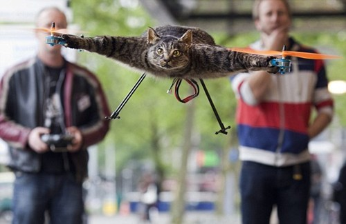 "thedailywhat:  Crazyass Cat Owner of the Day: When Dutch artist Bart Jansen's beloved cat was killed by a car, he did what any mourning owner of a cat named Orville would do: He had his pet taxidermied and attached it to propellers. Now Orville — oops, Orvillecopter — is ""flying with the birds… Oh how he loved birds. He will receive more powerful engines and larger props for his birthday. So this hopping will soon change into steady flight."" Don't miss the video. [death+taxes]"