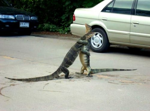 collegehumor:  Reptiles Hugging in a Parking Lot Dude…I thought you died in the war!!!