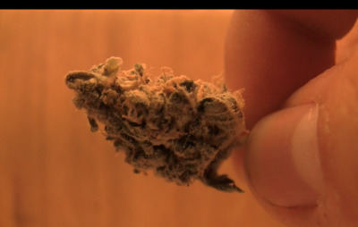look at this dank, juicy, trichome-peppered bud.