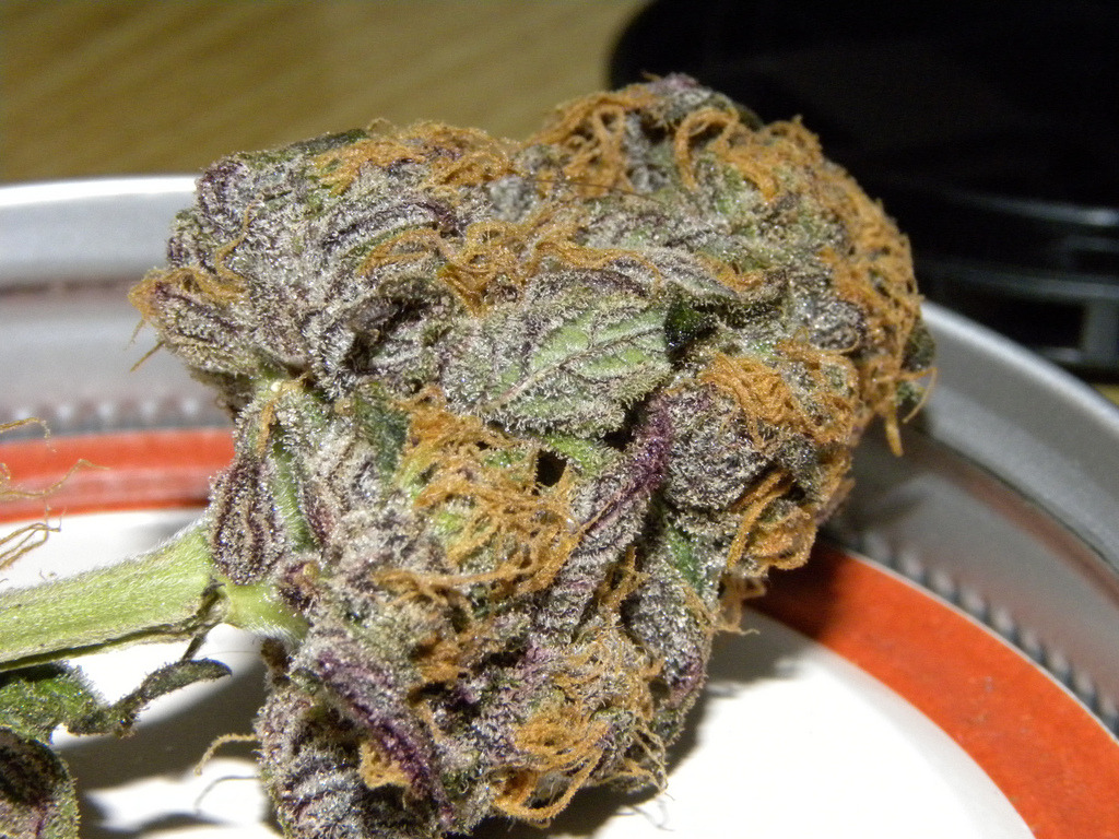 goodbud420:  Smoke Good