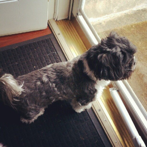 Ziggy staring down a dog outside, lol (Taken with instagram)