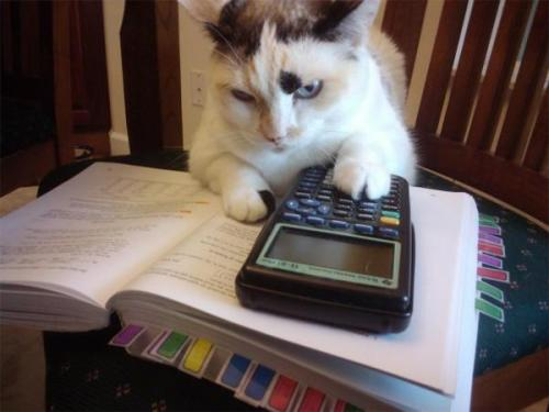 "thefluffingtonpost:  Cat Busted for Having 'Tetris' On Her Graphing Calculator AP Calculus had been the most boring class on Lola the kitty's schedule this semester, until she loaded a Tetris clone onto her TI-89 graphing calculator.  The discovery that her calculator could play games was a revelation for Lola and made the class many times more enjoyable, according to friends.  Her teachers and parents were less enthused, however. ""I was mortified when I got the call from school.  Shocked, really,"" said Lola's adoptive mom, Mary Snitker, of the call she received last week from a guidance counselor that Lola had been caught playing games during class.  ""She's always done so well in school.  Never used to get in trouble… but this is just unacceptable."" Friends think Lola should be cut some slack.  ""She already has a full ride to UConn,"" said lockermate and best friend forever, Judy Tan. ""So she goofed off a little bit senior year. Whatever. Her parents need to chill."" Via markbesada.  …That looks like a TI-84 plus; are you sure you meant TI-89?"