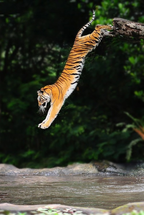 raisedbyw0lvess:  magicalnaturetour:  Photographer Jeffry Sabara