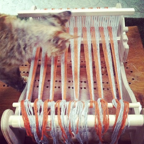 Cure for the Mondays: a loom warped with cashmere the night before. The cat helps too :). #weaving #yarn #juleprex #devonrex  (Taken with instagram)