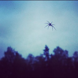 #itsy #bitsy #spider #hangingout #inside my #window #nearby #theforest (Taken with instagram)