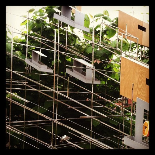 Feed the birds #highline #newyorkcity #nyc  (Taken with instagram)