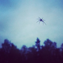 #itsy #bitsy #spider #hangingout #inside #my #window (Taken with instagram)