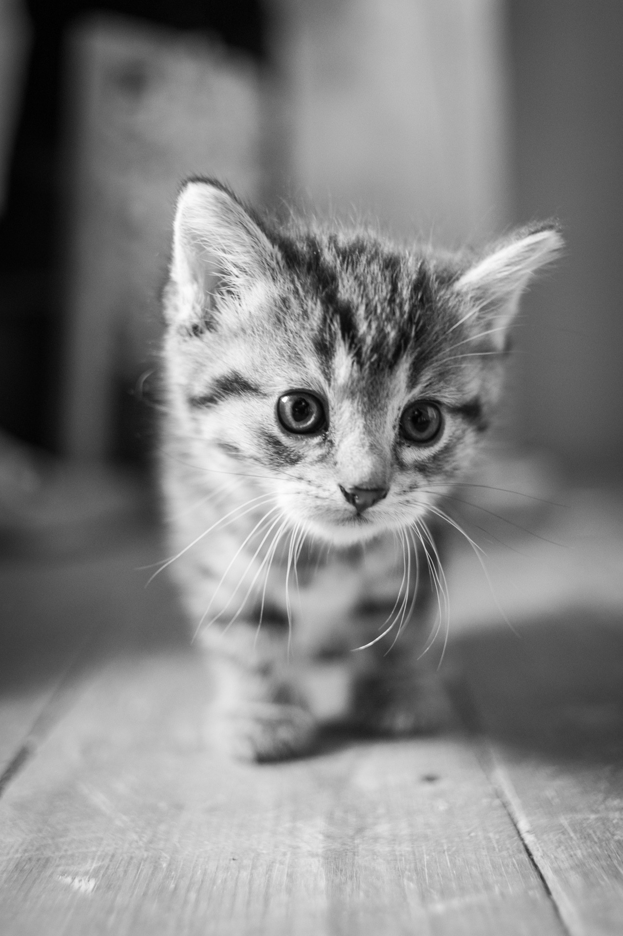 thefluffingtonpost:  PHOTO OP: Kitty With Bokeh Via tobi_digital.