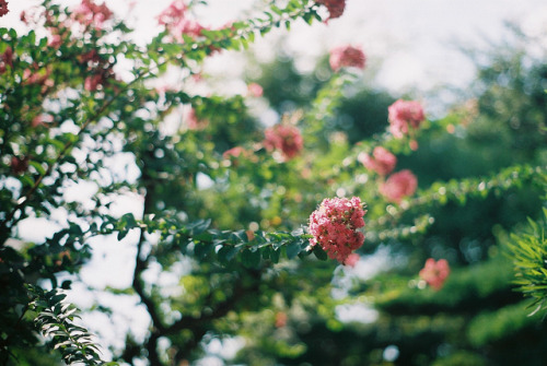 laughingfits:  untitled by *dapple dapple on Flickr.