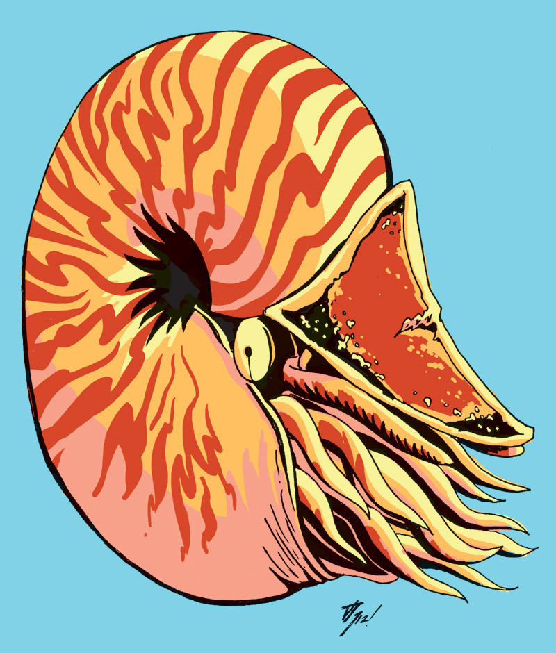 Chambered nautilus tattoo design for my sister Jillian. This one matches the blue-ringed octopus tattoo design I did for her a while back, and will go on whichever foot is the one she didn't get the octopus tattooed on. I think the left? Whatever. I design tattoos, it's pretty rad.