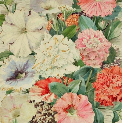 stilllifequickheart:  Alois Lunzer Carnations and Petunias 19th century