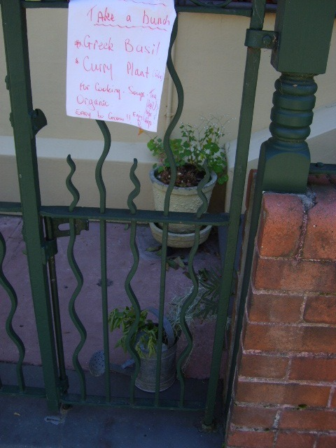 Basil by the bunch. Inner west.