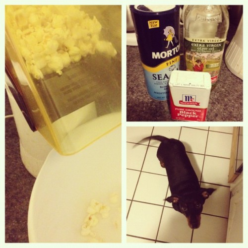 #picstitch #happydog #pup #popcorn #airpop #yum #movietime  (Taken with instagram)