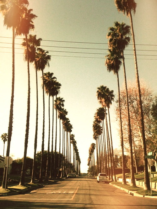 shorekids:  why do i like palmtrees so much?
