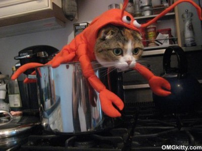 and then there were lobsters