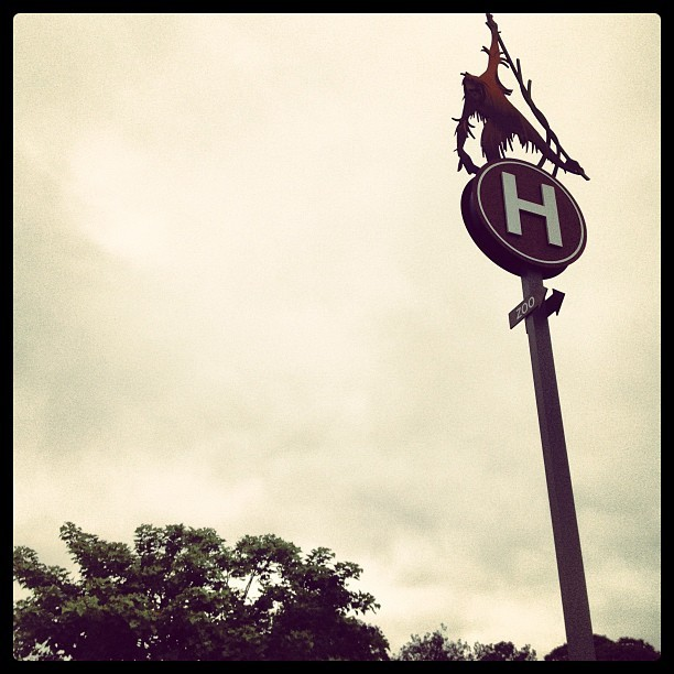 H is for… (Taken with Instagram at San Diego Zoo)