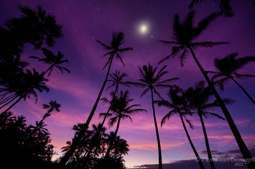 islamicthinking:  Predawn light, stars, and moon under a grove of palm trees at one of Hawaii's black sand beaches, Punalu'u. What does photoshop have on the earths natural beauty. #subhannallah